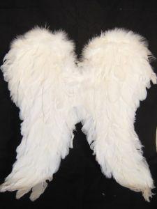 Крылья перьевые белые (20*50)